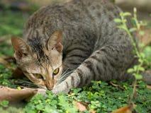 Katzenschlaf im Garten Lizenzfreies Stockfoto