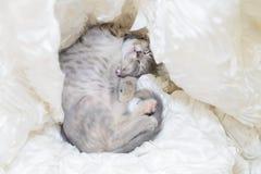 Katzenschlaf im weißen Stoff Stockfotos