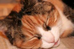 Katzenschlafen der Ingwergetigerten katze Lizenzfreies Stockfoto