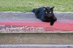 Katzenschwarzes Lizenzfreie Stockbilder