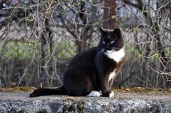 Katzensitzen Stockbild