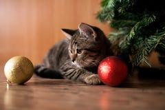 Katzenspiel mit Feiertagsbällen Lizenzfreies Stockfoto