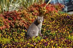 Katzenspiele und -jagden in den Blumen lizenzfreies stockfoto