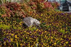 Katzenspiele und -jagden in den Blumen lizenzfreies stockbild
