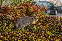 Katzenspiele und -jagden in den Blumen stockfoto