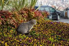 Katzenspiele und -jagden in den Blumen stockbild