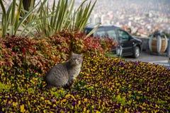 Katzenspiele und -jagden in den Blumen lizenzfreie stockfotos