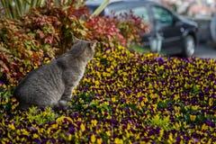 Katzenspiele und -jagden in den Blumen stockfotos