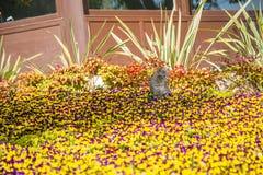 Katzenspiele und -jagden in den Blumen stockbilder