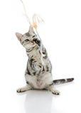 Katzenspielen Lizenzfreie Stockfotos