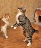 Katzenspielen der getigerten Katze Stockfotos