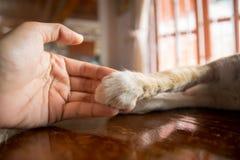 Katzentatze in der Hand Stockfotografie