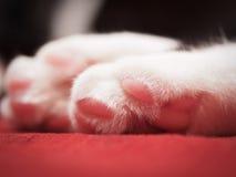 Katzentatzen stockfotografie