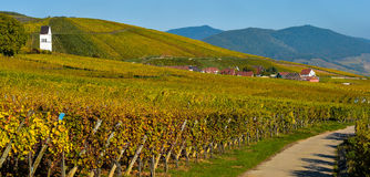 Katzenthal in the vineyard of Alsace Stock Images