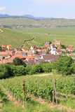 Katzenthal in the vineyard of Alsace Stock Photography
