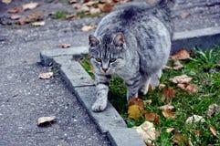 Katzenweg Stockfotos
