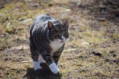 Katzenweg am sonnigen Tag stockfotografie