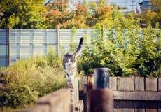 Katzenwege allein Stockfotos