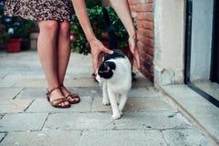Katzenwege in einem gemütlichen alten Hof Stockbild