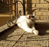Katzenweiß mit schwarzen Flecken im sonnenbeschienen Lügen des hellen Sommers Stockfotografie