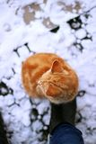 Katzenwinter-Orangeningwer lizenzfreie stockbilder