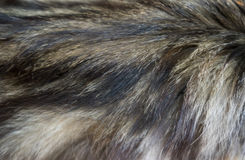 Katzenwolle Stockbild