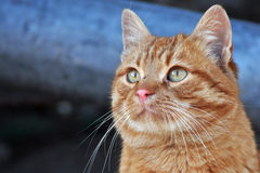 Katzeportrait Stockfotos