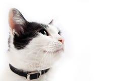 Katzeportrait Lizenzfreie Stockbilder