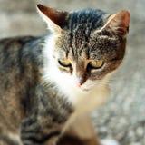 Katzeportrait Stockbild