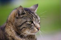 Katzeportrait Lizenzfreies Stockbild