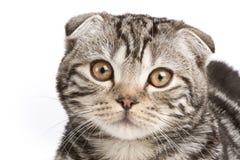 Katzeportrait Stockbilder