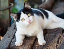 Katzeschauen Lizenzfreie Stockbilder
