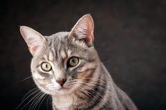 Katzeschauen Stockfotos