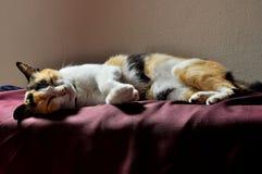 Katzeschlaf Stockfotografie