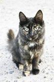 Katzesitzen lizenzfreie stockbilder