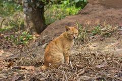 Katzesitzen Lizenzfreie Stockfotos
