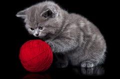 Katzespiele mit einer Kugel des Garns stockfotos