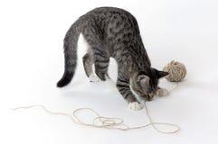 Katzespielen stockbild