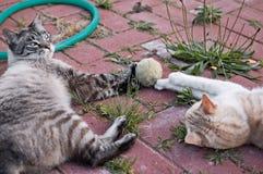 Katzespielen Stockfoto
