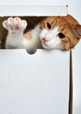 Katzespielen Lizenzfreie Stockbilder
