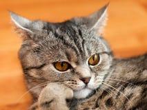 Katzetier Stockbild