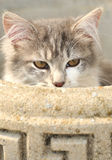 Katzeverstecken Stockfotos