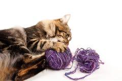 Katzeweißhintergrund Lizenzfreie Stockbilder