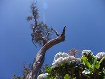 Kauai-Baum und Bush Lizenzfreies Stockfoto