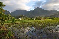 Kauai lantgård Royaltyfria Foton