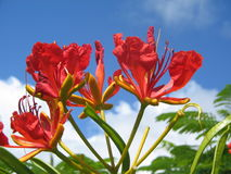 Kauai Flower Stock Photo