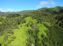 Kauai gräsplaner Royaltyfri Fotografi