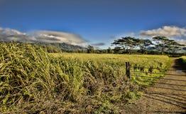 Kauai Hawaii. Arkivbilder