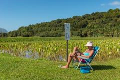 KAUAI, HAWAII, USA-DECEMBER 29, 2014: Female tourist relaxing wi. Thin taro fields hanalei valley royalty free stock image