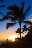 Kauai Sunset, Hawaii, USA. A man standing under the palm tree and talking to the sun over the phone Royalty Free Stock Photography